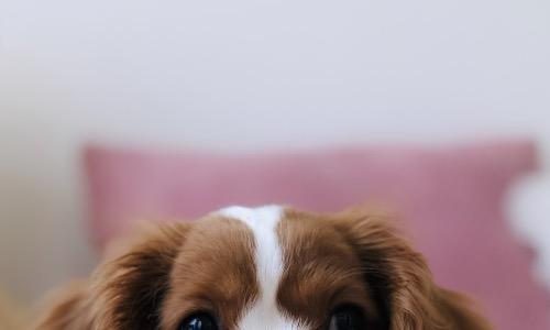 【夢占い】犬が出てくる夢の意味は?なつく?吠える?妊娠・出産している?